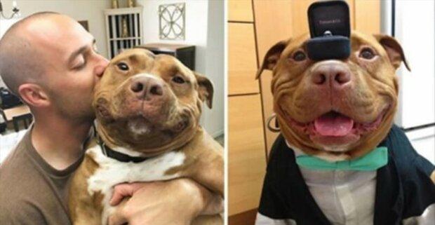 Pitbull přezdívaný Knedlíček má důvod k úsměvu každý den