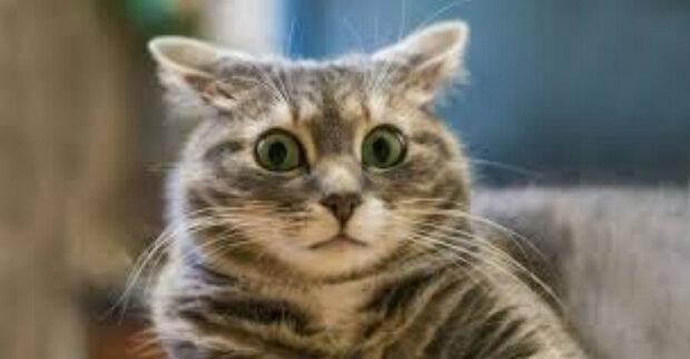 """Sociální síť pobavila kočka zábavnou reakcí na zpěv majitele: """"Můj kocour nenávidí špatný zpěv"""""""