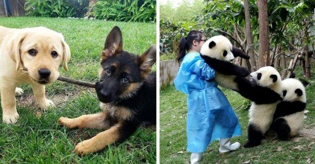 Chlupatí přátelé: jak zvířata projevují své přátelské pocity