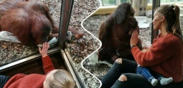 """Máma s dítětem se dotkly orangutana: """"stalo se známým, že pro to měla důvody"""""""