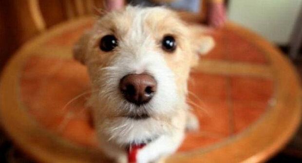 Muž pustil do svého domova toulavého psa, a ten se mu za to