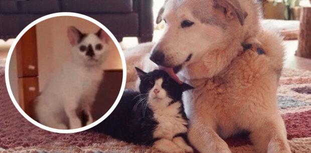 Psovi se stýskalo po zemřelému příteli, čtyři koťata udělala psa zase šťastným