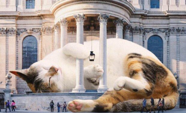 Kočka. Foto: snímek obrazovky mrmattmccarthy.com