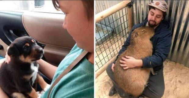 Jaké pocity prožívají zvířata k člověku