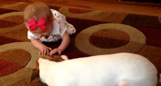 Chytrý pes ukázal příklad miminku v přemisťování bytem, v důsledku čehož se stal hrdinou na síti