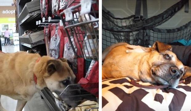 Ten chlap se rozhodl potěšit toulavého psa a přivedl ho do obchodu na nákupy. Do koše dali vše, co se pes dotkne nosem