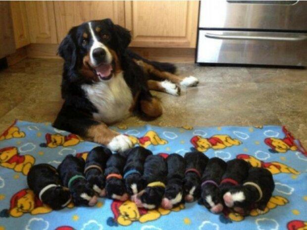 """""""Půvaby mateřství"""": Zvířata také vědí, že není snadné být matkou"""