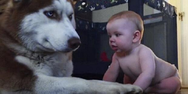 """Rodiče nechali husky hrát s dítětem: """"Za několik vteřin pes ztratil trpělivost"""""""