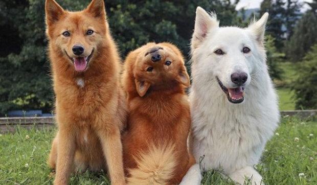 """""""Špic se polámal"""": Pes pózuje na fotkách tak, jak živí psi nedělají"""