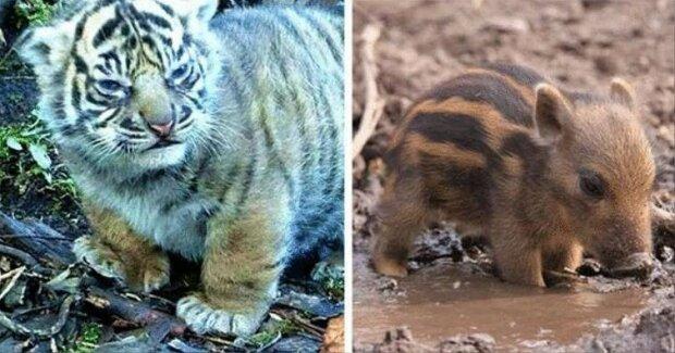 """""""Velmi krásné a neobvyklé"""": snímky mláďat divokých zvířat"""
