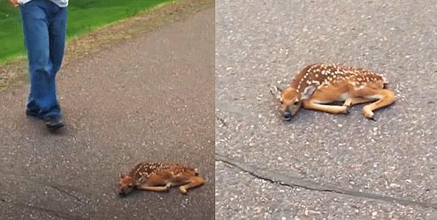 """""""Řidiči se v poslední chvíli podařilo zpomalit"""":- jelen byl na silnici nehybný"""