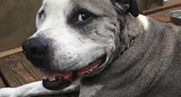 Toulavý pes zachránil ženu před loupežníkem
