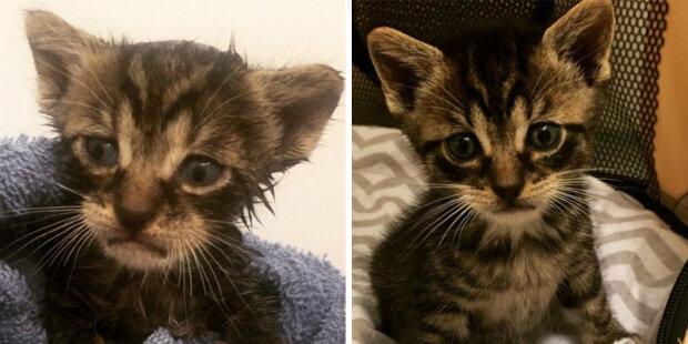 """""""Jeho čumáček daval najevo jeho duševní stav"""": Kotě s nejsmutnějším čumáčkem hledal svoji maminku a našel"""