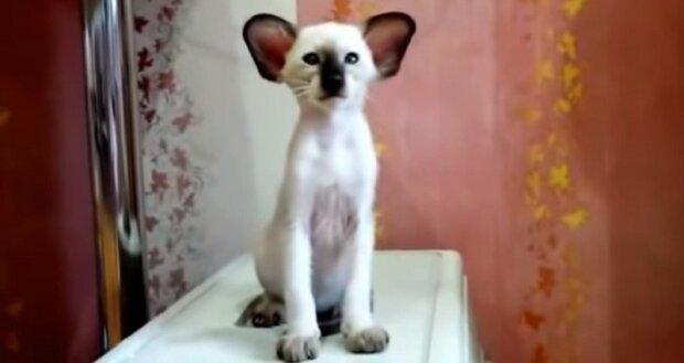 """""""Chce se říct, Miláčku, všechno bude dobře"""": Nejroztomilejší kotě ve světě"""