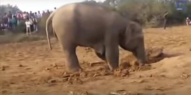 """""""Maminčina láska"""": Slonice kopala jámu několik hodin po řadě, aby zachránila své mládě"""