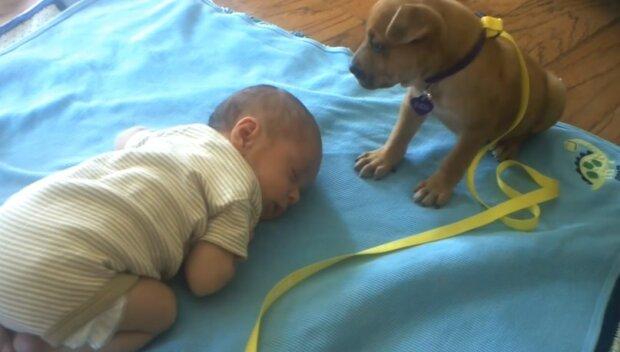Stěně ze všech sil bojuje se spankem zatímco jeho malý majitel spí