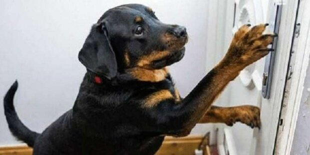 """""""Pes si uvědomil, že mám velké potíže a začal skočit na dveře. Pohotovostní tým řekl, proč musím být vděčný psu"""""""