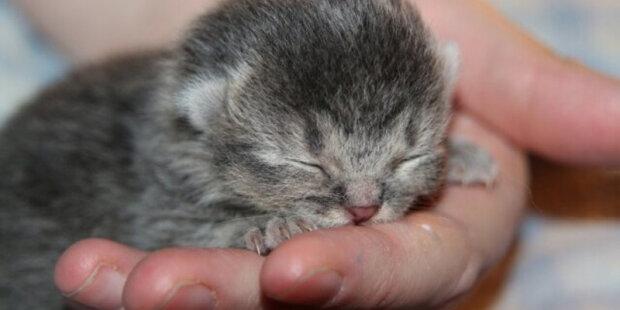 Muž se ujmul opuštěná koťata a nahradil pro nich matku. Mláďata vyrostly a ukázalo se, že nejsou to obyčejné kočky