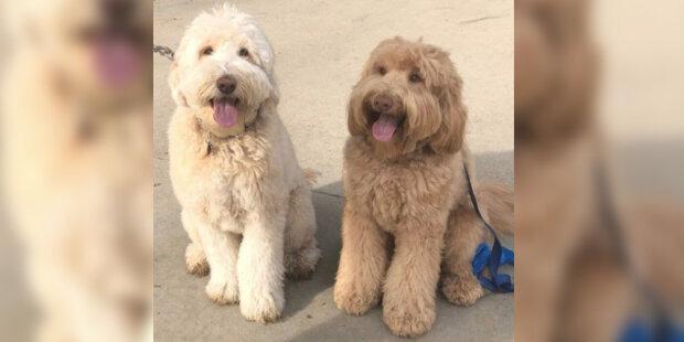Pes na procházce potkal bratra, kterého dávno ztratil