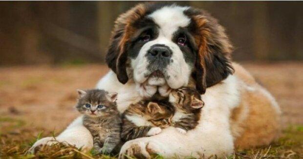 """Nejmilejší stvoření: """"Deset nejlaskavějších plemen psů na světě"""""""