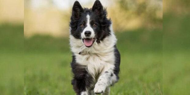 """Kynologové pojmenovali nejvíce oddaných psů: """"byl zveřejněn seznam deseti plemen»"""
