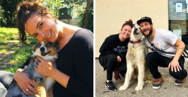 """Psi nemohou skrývat své štěstí: """"právě byli odvezeni z útulku»"""