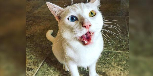 """Toulavá kočka se tvarohu nedotkla a celou noc seděla pod dveřmi: """"Chtěla víc než to"""""""