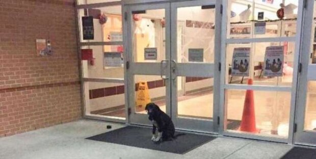 Každé ráno pes seděl u školních dveří a vrtěl ocasem v očekávání pomoci