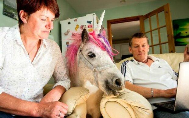 """""""Oblíbený jednorožec"""": skotská rodina obsahuje barevného koně přímo ve svém domě"""
