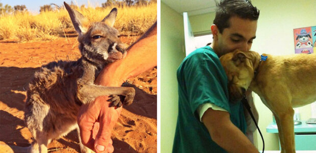 """""""Zvířata mohou říci """"Děkuji"""": dotýkají se snímky zvířat, které projevily vděčnost za pomoc"""