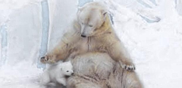 Lední medvídě si poprvé hraje se svou maminkou na sněhu