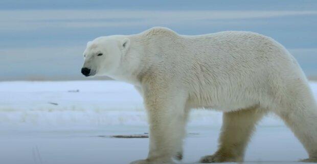 Pravda nebo fikce, že medvědi si při lovu zakryjí nos tlapkou