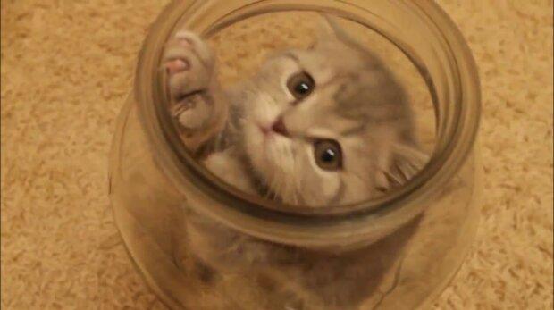 Malé kotě vlezlo do zavařovací sklenice a nemohlo se dostat zpět: Jak maminka kočka pomohla svému mláděti