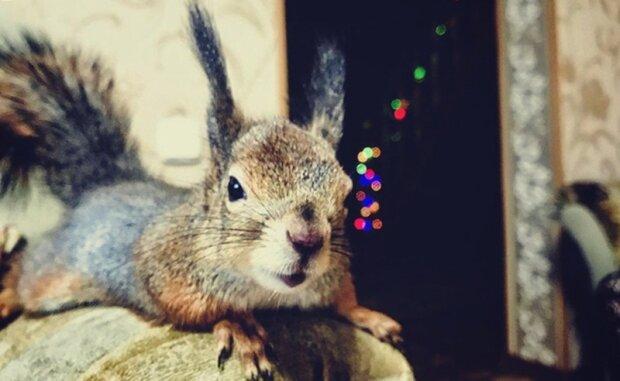 """""""Z keřů mi veverka vylezla přímo na nohu. Sotva mohla chodit a skákat"""": muž ujmul se veverku a zavedl ji účet na Instagramu"""