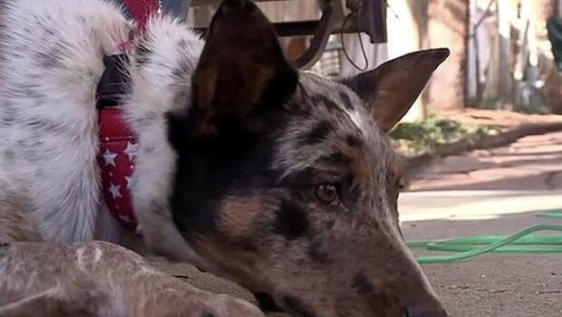 82letý muž přežil mozkovou mrtvici díky bdělosti psa. Podrobnosti