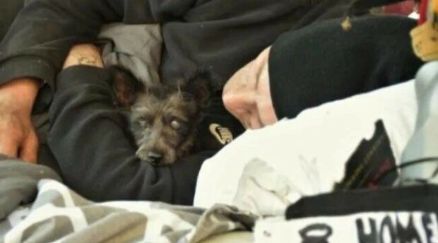 Pes, jehož majitelem byl bezdomovec, byl ukraden. Zvíře našli, ale muž ztratil smysl života