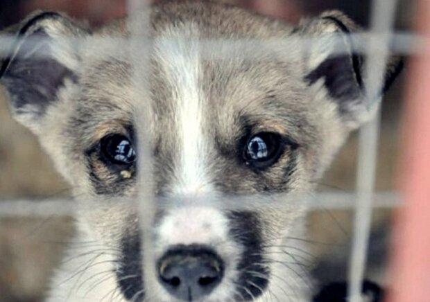 """""""Duševní okamžik"""": Žena vešla do útulku, aby si vybrala psa"""