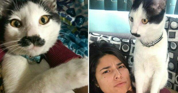 """Kocour Alberto s neobvyklým """"knírem"""" krade srdce mexických koček"""