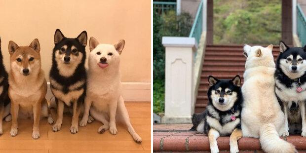 Hina je pes škůdce, který kazí všechny skupinové záběry. Podrobnosti