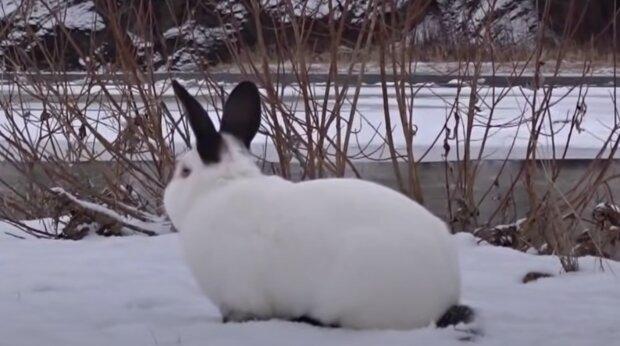 Králík. Foto: snímek obrazovky YouTube