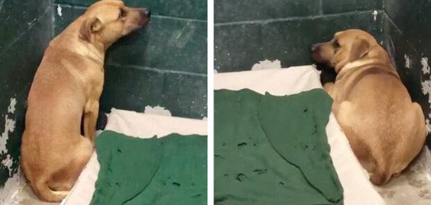 Rodina nechala psa v útulku, protože byl rád kopal v popelnici