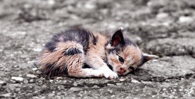 """""""Jeho téměř beztížné tělo se třáslo strachem"""": Příběh koťátka, který nikomu jinému nikdy neublíží"""