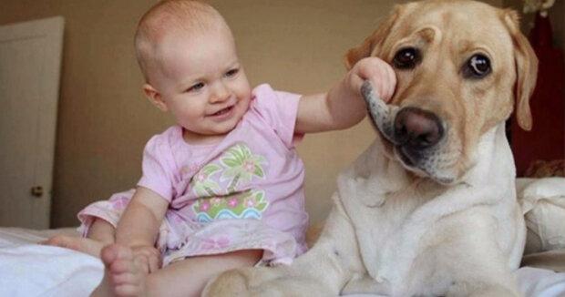 Několik veselých příčin pořídit si psa