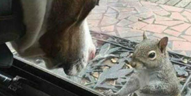 """""""Veverka klepe na dveře každý den"""": a po 8 letech se rodina dozví, že veverka chce jim něco ukázat"""