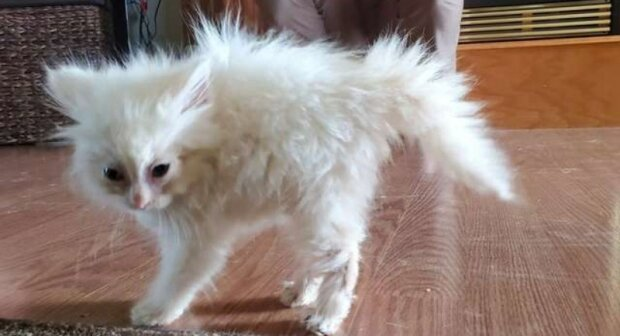 Špinavé kotě ještě ne otevřilo očka, ale už pochopilo, že nejvíc na světě chce mít vlastní dům
