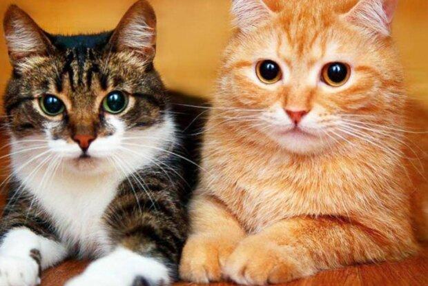 Vědci zjistili, jak se dívat na kočku, aby vás měla ráda