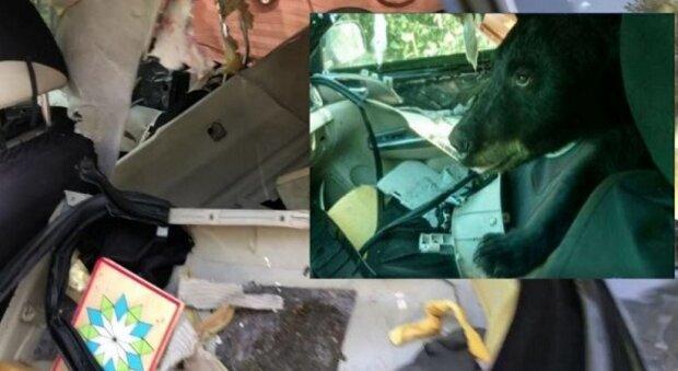 """Medvěd-chuligán se dostal do auta, snědl banány a vyzkoušel všechno ostatní: """"Musel jsem zavolat policii"""""""