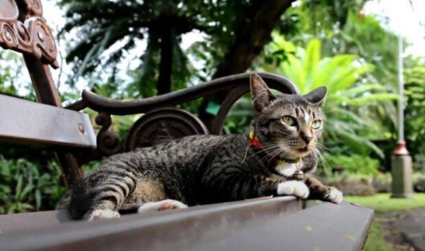 Kvůli kočce, která byla koupena v Rusku, dostal britský občan vážnou pokutu. Podrobnosti