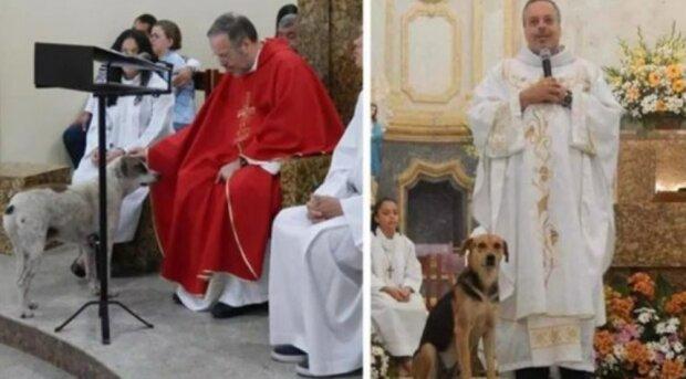 """""""Nechá všechny pouliční psy do kostela"""" - kněz našel způsob, jak milovat všech pouličních zvířat"""