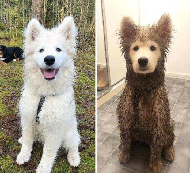 """""""No, trochu jsem si dováděl"""": Psi před a po procházce"""